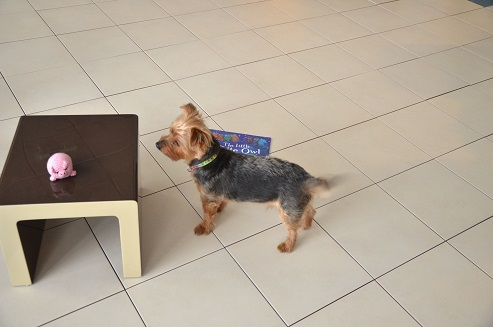 Floor Tiles for Pet owners